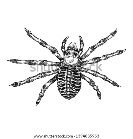 c69fcd2ab Black spider close up, big scary spider isolated, poisonous insect ,  arachnophobia background, drawing tattoo design. Drawn witchcraft, voodoo  magic ...