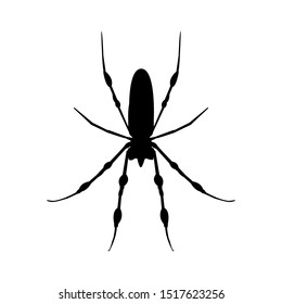 black spider icon- vector illustration. black silhouette spider icon isolated on white background. Element design for Halloween, postcard, app, poster.