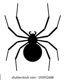 Black spider Silhouette