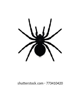 Black spider silhouette, close-up spider, scary big spider isolated on white, poisonous isect , arachnophobia background, spider vector icon