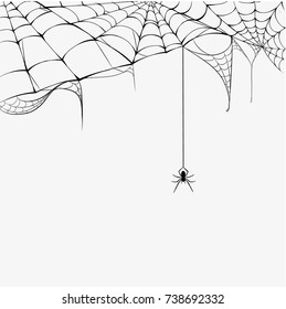 Black spider and torn web Halloween. Scary spiderweb. Isolated on white vector illustration