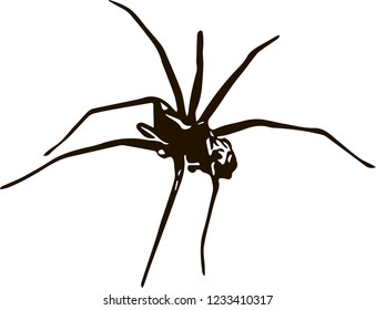 Black spider (vector)