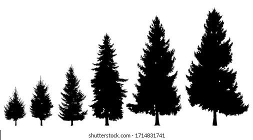 Black tree silhouette on a white background. Set of trees of different size, age. High, low trees, pine. Detailed isolated image of forest