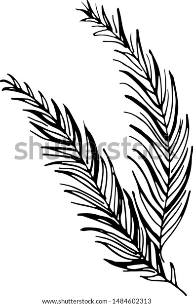 Black Tropical Leaves On White Background Stock Vector Royalty Free 1484602313 Download this tropical leaves vector illustration now. https www shutterstock com image vector black tropical leaves on white background 1484602313