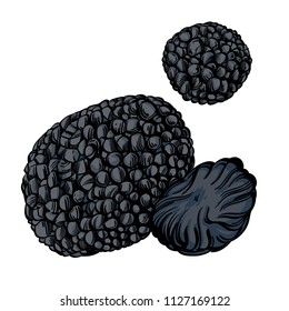 Black truffle, edible delicacy mushroom. Vector illustration isolated on white background.