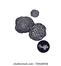 Black Truffle. Gourmet mushroom. Hand drawing. Style Vintage engraving. Vector illustration art. Black and white. Isolated objects of nature. Cooking food design for menu, store signs, markets.