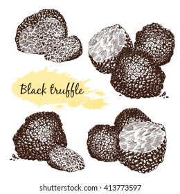 Black truffles group and slices isolated on white. Delicacy and healthy food