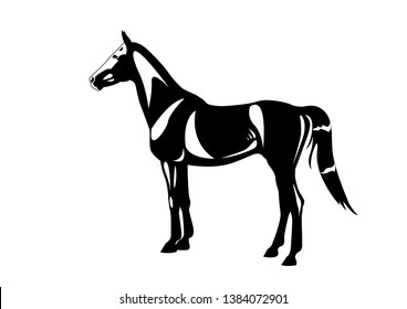 The black vector horse line scetch illustration art drawing stalion mare  animal equestrain