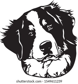 black and white bernese mountaing dog face illustration