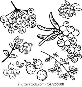 Black and white berries set 2. Hand drawn illustration.