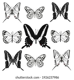 black and white butterflies set