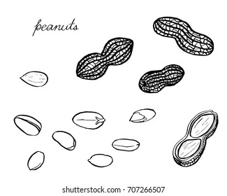 A black and white card with hand drawn peanuts and peanuts in shells isolated on white. Coloring book