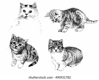 Black and white cats and kittens set inkn hand drawn vector illustration