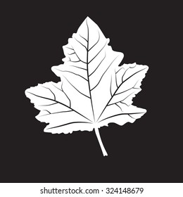 Black and white colors leaf. Realistic shape leaf isolated on blackboard. Vector silhouette leaf. Vector single leaf icon, symbol. Natural, floral, tree, botany background