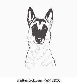 Black and white contour illustration head portrait of one beautiful malinois dog. Belgian sheepdog.