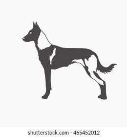 Black and white contour illustration portrait of one standing beautiful malinois dog. Belgian sheepdog.