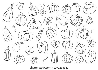 Black and white contour set of pumpkins with flower and leaves. Templates collection of squash and gourd for harvest and halloween hand drawn monochrome isolated on white