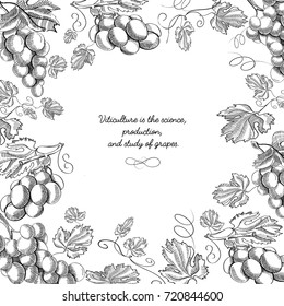 Black and white creative frame doodle composition with sprigs and stems of delicious grapes hand drawn vector illustration