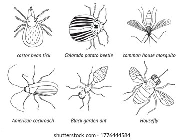 Black and white design illustration, parasitic insects: tick potato beetle mosquito cockroach roach ant housefly. Garden Forrest City. Pesticides dangerous bugs set. Insect spray pesticides commercial