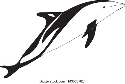 Black and white dolphin, orca. directed to the right. Isolated on white background Vector graphics. Stock Vector Illustration. Copy space.