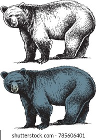 a black and white drawing, and a colorful drawing of a bear.
