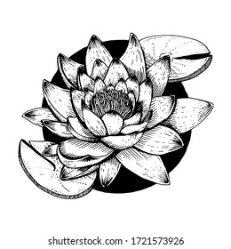 A black and white drawing of a Lily flower. Graphic vector illustration. Hand-drawn drawing.