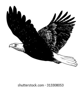 Black and white eagle, hand drawn on white background