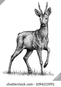 black and white engrave isolated deer vector illustration