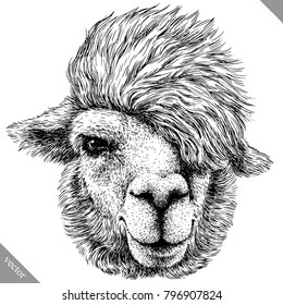 black and white engrave isolated Lama vector art