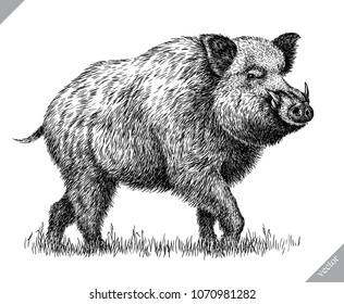 black and white engrave isolated pig vector illustration