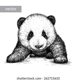 black and white engrave isolated vector panda bear