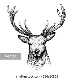 black and white engrave isolated vector deer