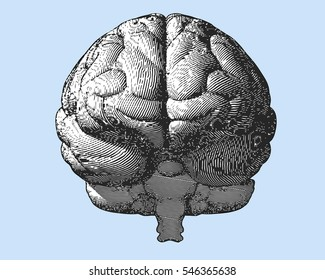 Black and white engraving brain illustration in front view on light blue background