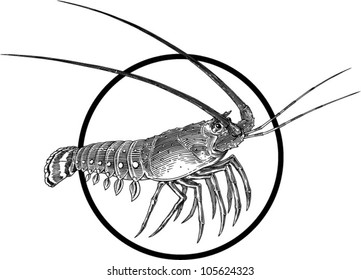 Black and white engraving illustration of lobster. Circle frame can be easily removed