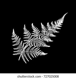 Black and white fern illustration. Ancient plant.