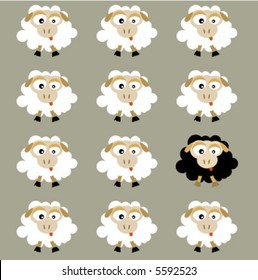 black and white flock sheep