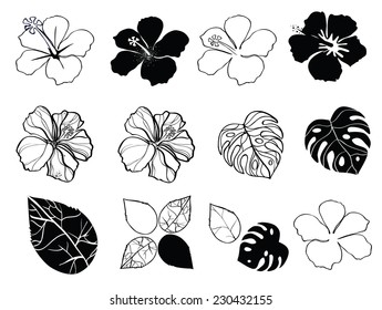 Black and white flowers of hibiscus