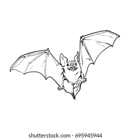 black and white flying Halloween vampire bat, sketch style vector illustration isolated on white background. Hand drawn, sketch style vampire bat flying with wide spread wings, Halloween object