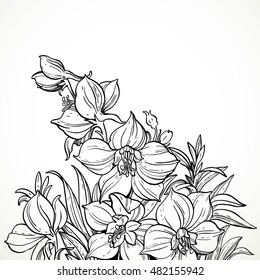 Black and white graphic line drawing of flowers and field for the text