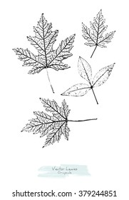 Black and white (grayscale) vector set of maple and ash tree leaves; stylized as stamp or imprint; rustic or boho style