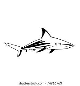 black and white great blue/white shark vector illustration