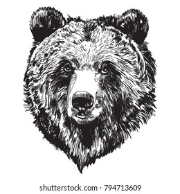 Black and white hand drawing bear head. Illustration vector.