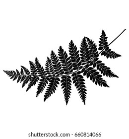 Black and white hand drawn graphical fern leaves twig. Vector.