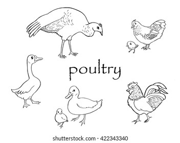 Black and white hand drawn ink and brush  set of hen and chicken, duck and duckling, goose, rooster and turkey. Isolated vector illustration in cartoon line art style.