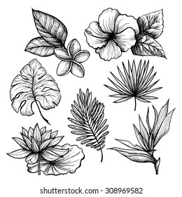 Black and white hand drawn tropical leaves and flowers set isolated vector illustration