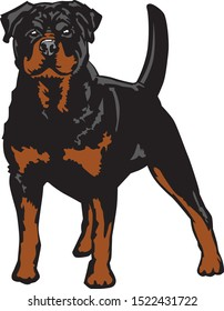 black and white illustration of a frontal standing rottweiler