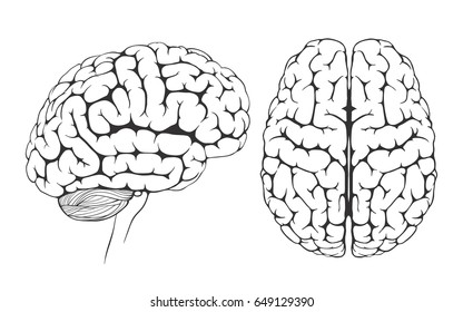 black and white illustration of a human brain