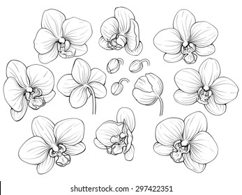 black and white illustration of line orchid set