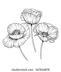 black and white illustration of a poppy  flowers
