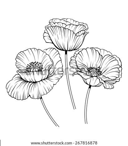 Black White Illustration Poppy Flowers Stockvector Rechtenvrij
